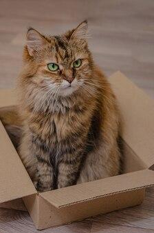 Pluizige huiskat zit in een kartonnen doos.