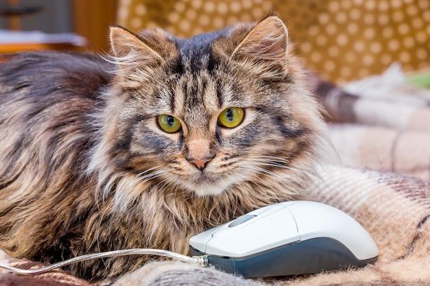 Pluizige kat dichtbij computermuis
