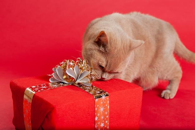 Pluizige kat met een rood cadeau