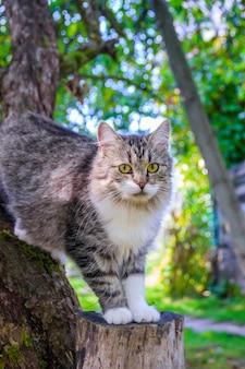 Pluizige kat zit op een boomtak.