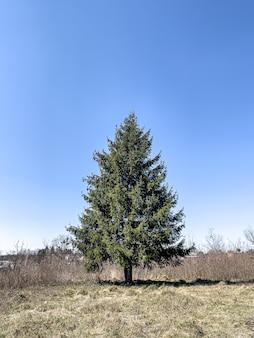 Pluizige levende boom in een open ruimte tegen de lucht.