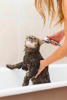 Pluizige natte kat in de badkamer neemt een douche