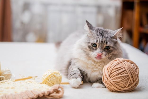 Pluizige schattige grijze kat ligt tussen strengen garen en likt zijn lippen