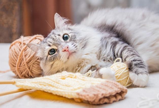 Pluizige schattige grijze kat speelt plezier met ballen van garen verwarde draden, ligt tussen de strengen