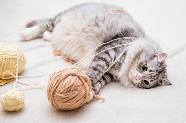 Pluizige schattige grijze kat speelt vrolijk met ballen van garenkrabben met achterpoten die op zijn rug in de war raken