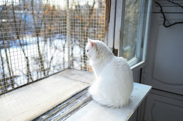 Pluizige witte kattenzitting op een balkon bij de winter