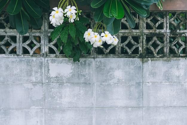Plumaria-bloemen en tak over een oude witte bakstenen muur