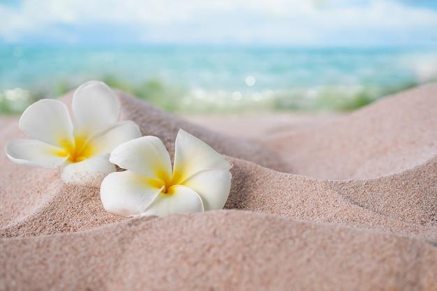 Plumeria bloemen op zandstrand aan de kust op vervagen blauwe zee en blauwe hemel.