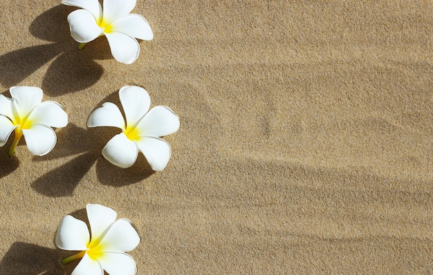 Plumeria bloemen op zandstrand achtergrond