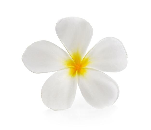Plumeria en frangipani bloemen op wit