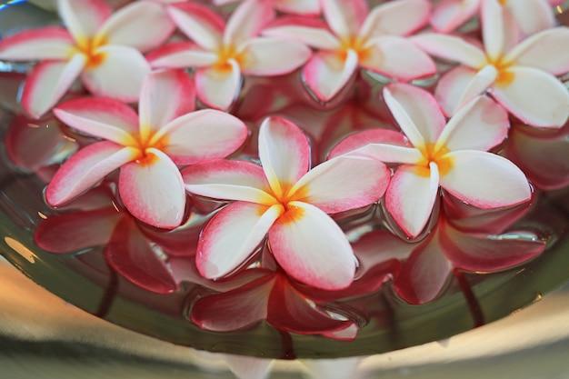 Plumeria of frangipani-bloem die in water in aluminiumdienblad drijft.