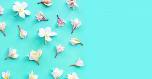 Plumeria of frangipani bloem op blauw