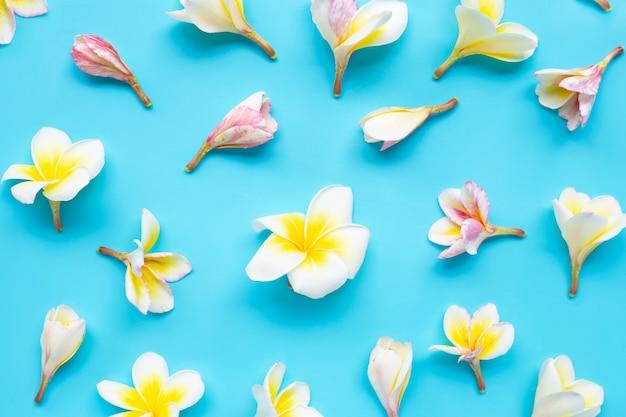 Plumeria of frangipanibloem op blauw naadloos patroon. bovenaanzicht