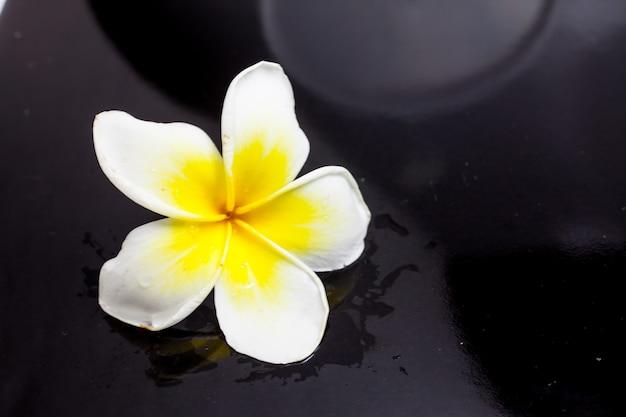 Plumeria op zwarte achtergrond.