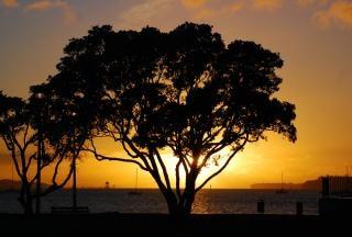 Pohutukawa zonsondergang