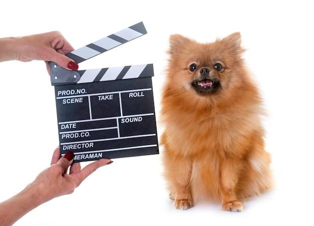 Pomeranian spits en film klepel