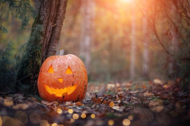 Pompoen hefboom o lantaarn op herfstbladeren in donker bos