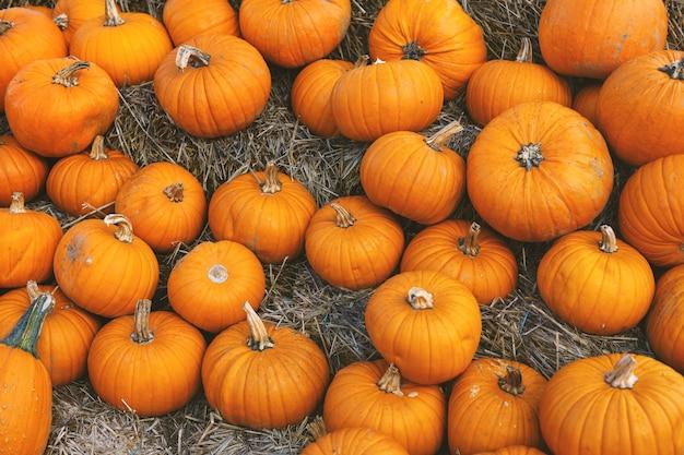 Pompoen herfst achtergrond met veel pompoenen. detailopname