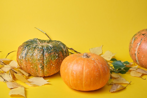 Pompoenen en herfstbladeren op een gele achtergrond