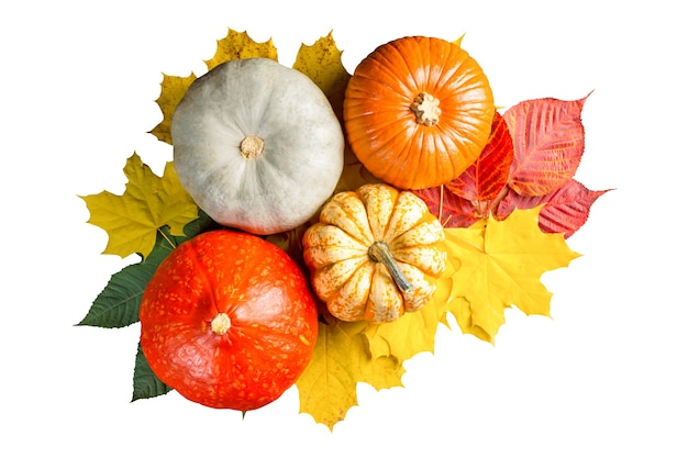 Pompoenen en kleurrijke bladeren op wit wordt geïsoleerd
