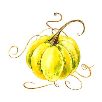 Pompoenen. hand getekend aquarel op wit met splash. herfst groenten.