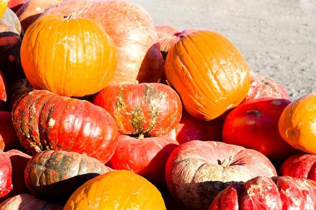 Pompoenen met verschillende kleuren op een boerenmarkt. biologisch boerderijconcept.