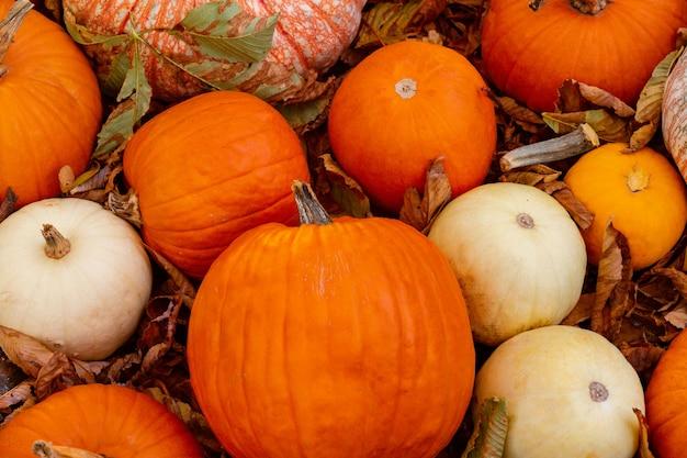 Pompoenen op de droge bladeren bij de pompoenflard. boerenmarkt buiten. straatdecoratie voor thanksgiving day en halloween. herfst stilleven. sinterklaasfeest in oktober en november.