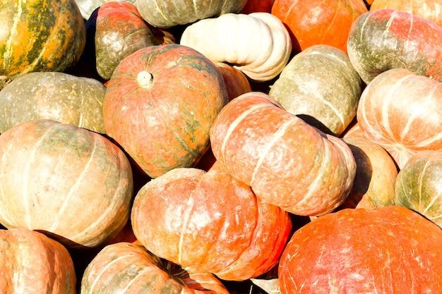 Pompoenen op een boerenmarkt