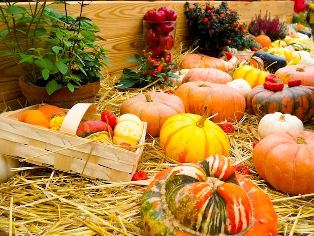 Pompoenregeling te koop, herfststilleven met pompoenen op houten