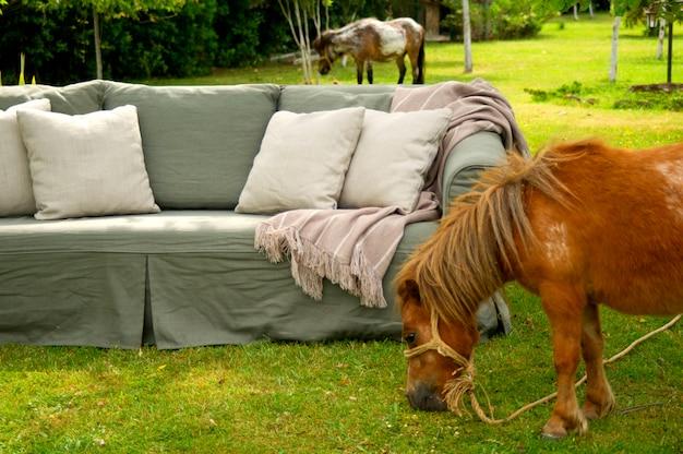 Pony grazen in de wei