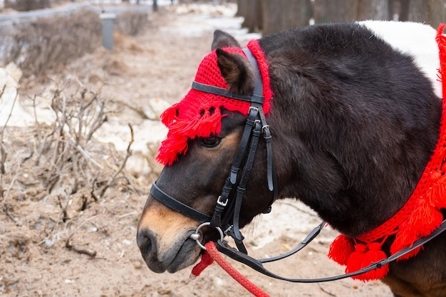 Pony in winter park