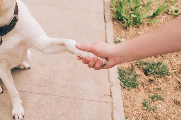 Poot van hond en menselijke hand