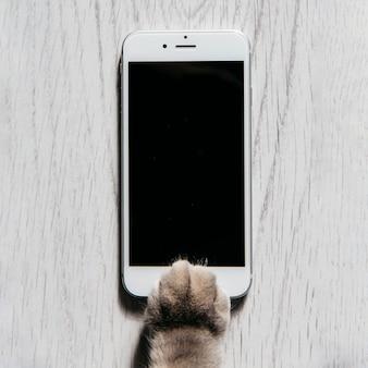 Poot van kat met mobiele telefoon