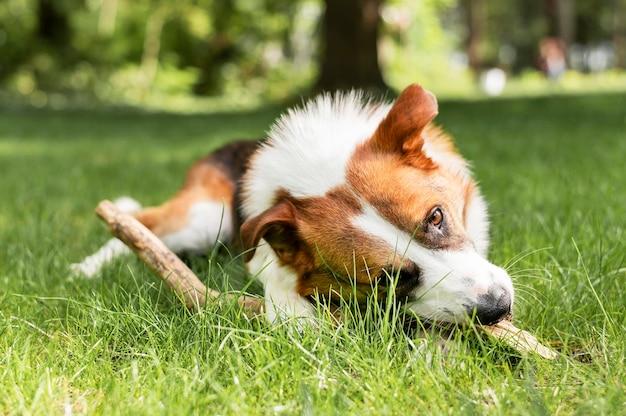 Portret dat van leuke hond in openlucht speelt