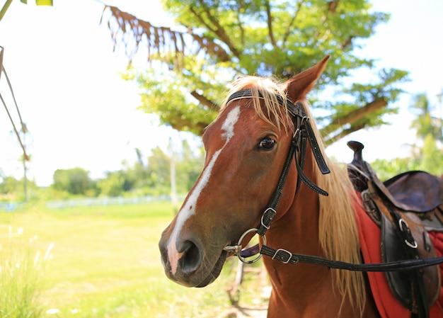 Portret dichte omhooggaand van het gezicht van een jong paard.