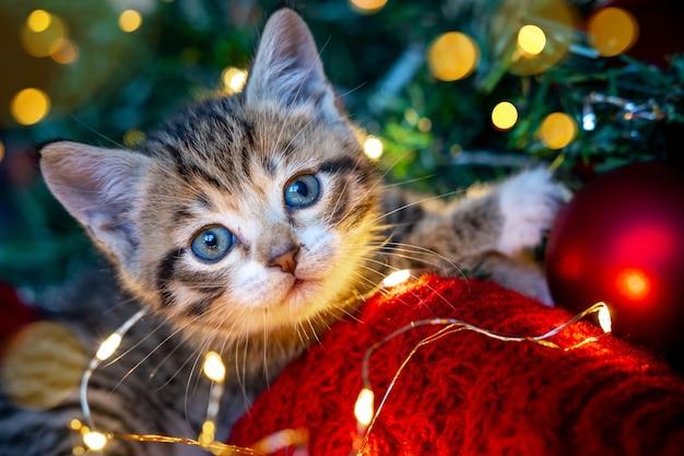 Portret gestreepte kitten spelen met kerstverlichting garland