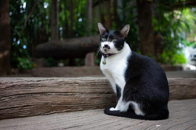 Portret schattige kat zit voor het huis is een schattig huisdier en goede gewoonten
