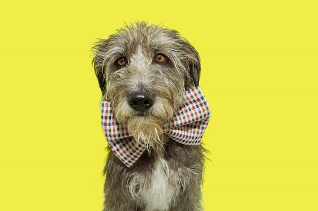 Portret serieuze en elegante harige hond vieren carnaval of verjaardagspartij.