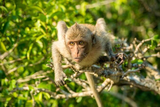 Portret van aap in het wild