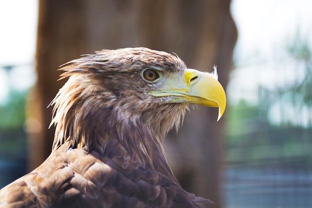 Portret van adelaar close-up