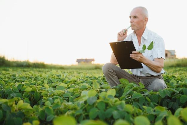 Portret van boer in soja veld gewas te onderzoeken bij zonsondergang