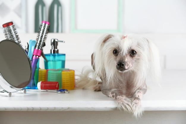 Portret van chinese crested dog bij herenkapper