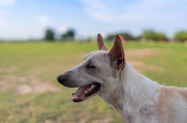 Portret van dakloze hond in weidetuin, mond open, glimlachen, kijkend, huisdier