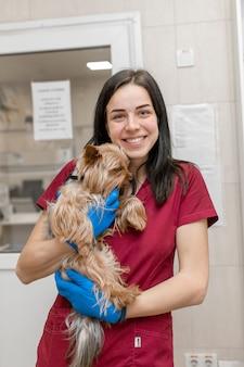Portret van de jonge kaukasische terriër van yorkshire van de vrouwen veterinaire arts.