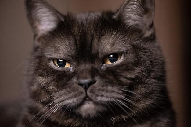 Portret van de kat met grote gele ogen