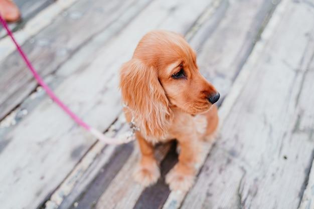 Portret van de leuke hond van de puppycocker-spaniël in openlucht