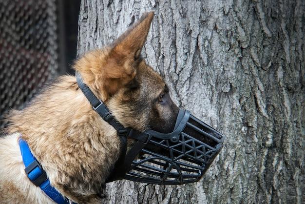 Portret van duitse herder. honden uitlaten in de natuur. bescherming tegen hondenbeten