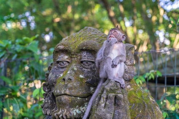 Portret van een aap zittend op een stenen sculptuur van een aap in het heilige apenbos in ubud, eiland bali, indonesië. detailopname