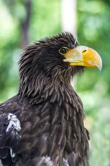 Portret van een adelaar