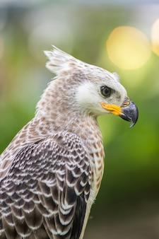 Portret van een adelaarssymbool de jacht